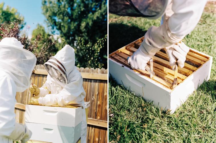 Adventures in Honey Extracting | Northern Colorado Beekeeping
