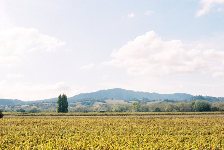 Napa-California-Wedding-Photographer-DeFiore-Photography-www.defioreart.com