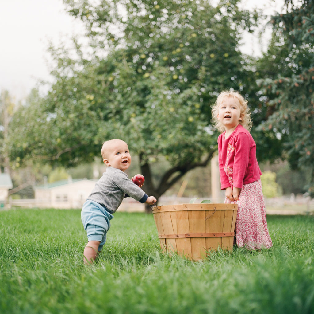 Fort Collins Family Photos, Siblings Picking Apples